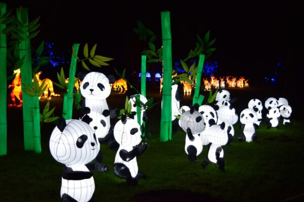 Illuminated Pandas at San Antonio Christmas Festival in Retama Park